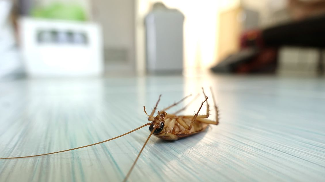 insect on the floor